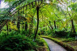 Hakgaka botanical gardens Nuwara eliya